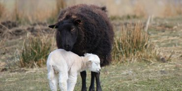 The science behind the wool industry. The importance and value of wool production from sheep