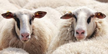 Top Tips for Selling Wool Carpets  – a paper for retailers